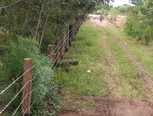 Fence for Tree Planting Project at Katunguru School
